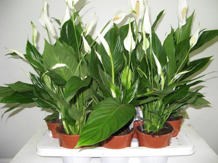 Комнатные растения в интерьере