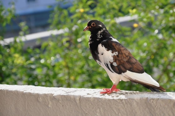 Как отвадить голубей с крыши балкона