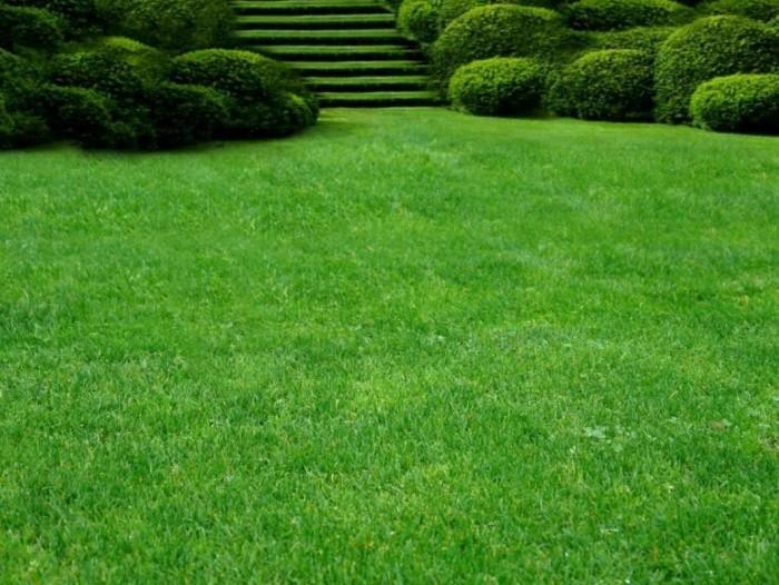 Как выбрать лучший рулонный газон