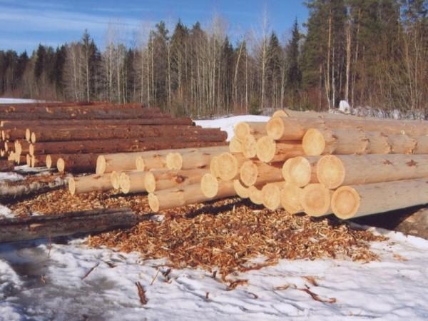 лес зимней заготовки Вожега