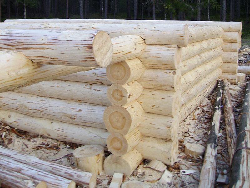 Зимний или летний лес для сруба